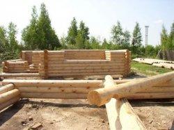Защита от повреждений древесины