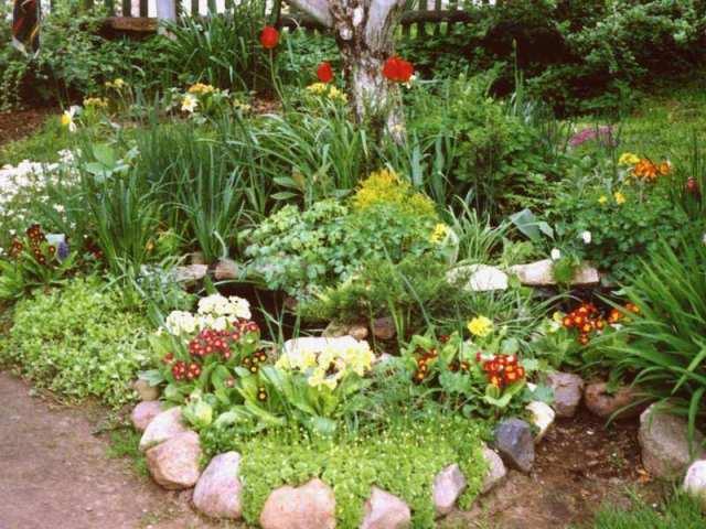 Растения в переднем ряду