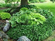 Использование листвы в ландшафтном дизайне