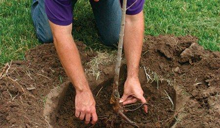Что нужно знать о посадке плодово-ягодных деревьев?