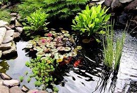 Какими растениями обсадить пруд