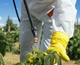 Боротьба з грибковими ураженнями рослини